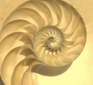NautilusCutawayLogarithmicSpiral - Copy