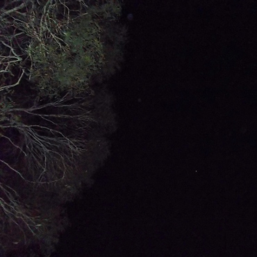 Jan 22, 2014: ship flies overhead, to the right of the tree