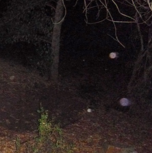 More orbs entering the grove.
