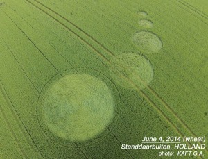 Crop Circle Standdbuitten, Holland, reported June 4, 2014.