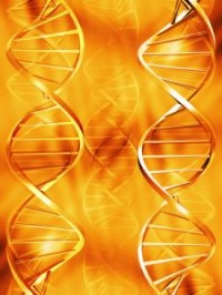 genetci-dna-yellow-twin-SS-e1377221405727