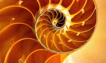 Nautilus shell interior; the golden spiral.