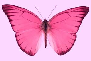 WF-Orange-Butterfly-copy