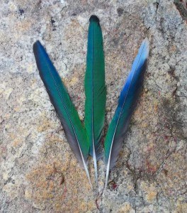 Gifts from a Port Lincoln Parrot, most beautiful blue-green merged vibration.
