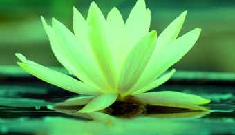 The-jewel-of-the-lotus-is-within - Copy