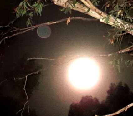Full Moon, October 16, 2016, with orb 'hanging' from a tree branch.