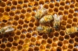 honeycomb-bee-hexagon